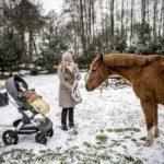 Stokke Trailz – wózek w każdy teren?