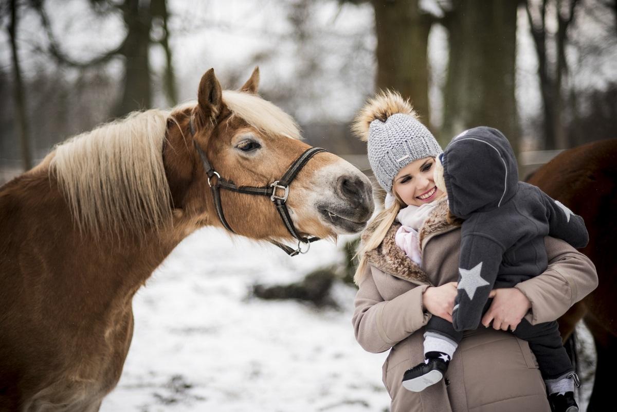 piękny koń sesja